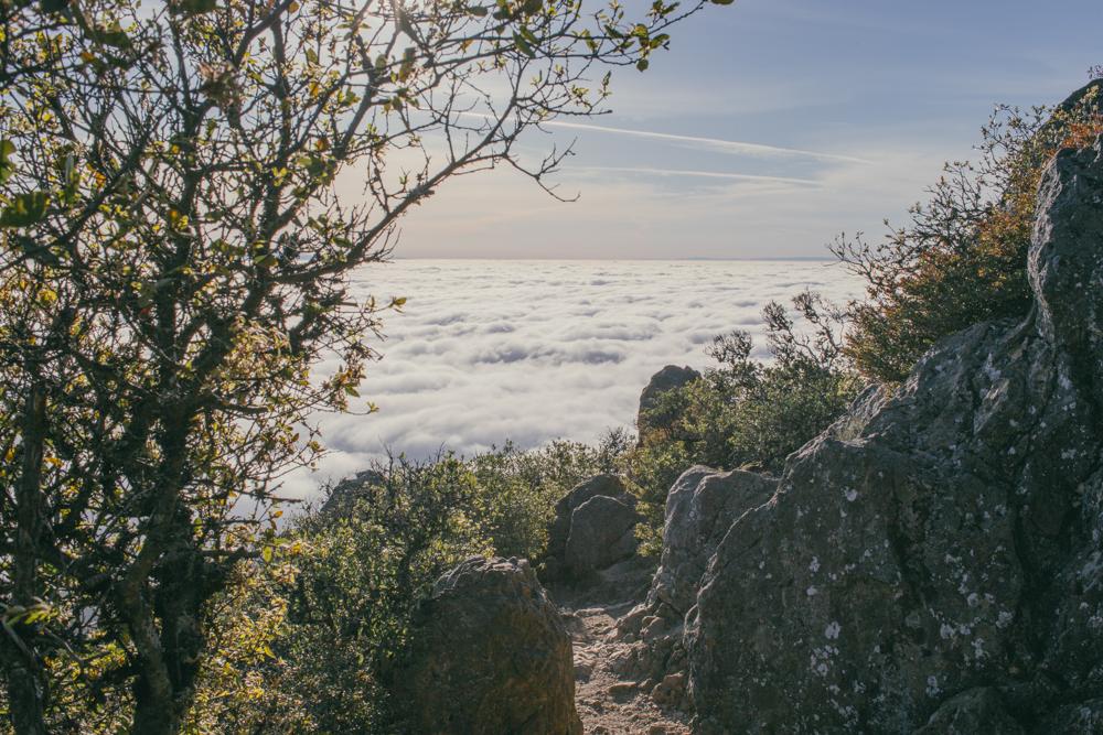 juniper ridge 13