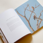 Lodestars Anthology Australia
